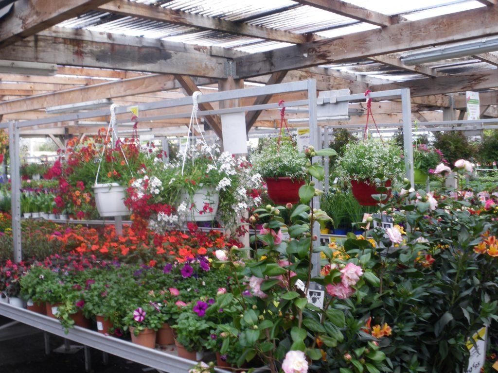 Plantes à la jardinerie