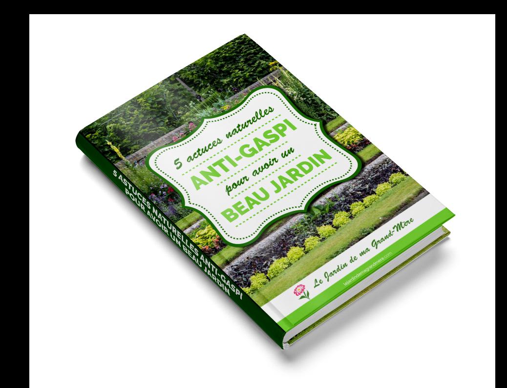 5 Astuces Naturelles Anti-Gaspi pour Avoir un Beau Jardin