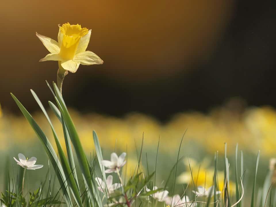 Plantes sante, cueillette pour embellir son jardin ou se soigner