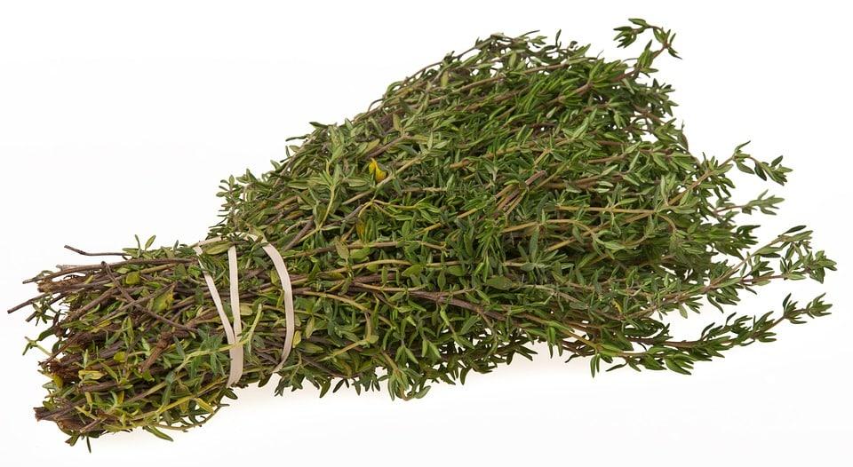 thym plantes aromatiques