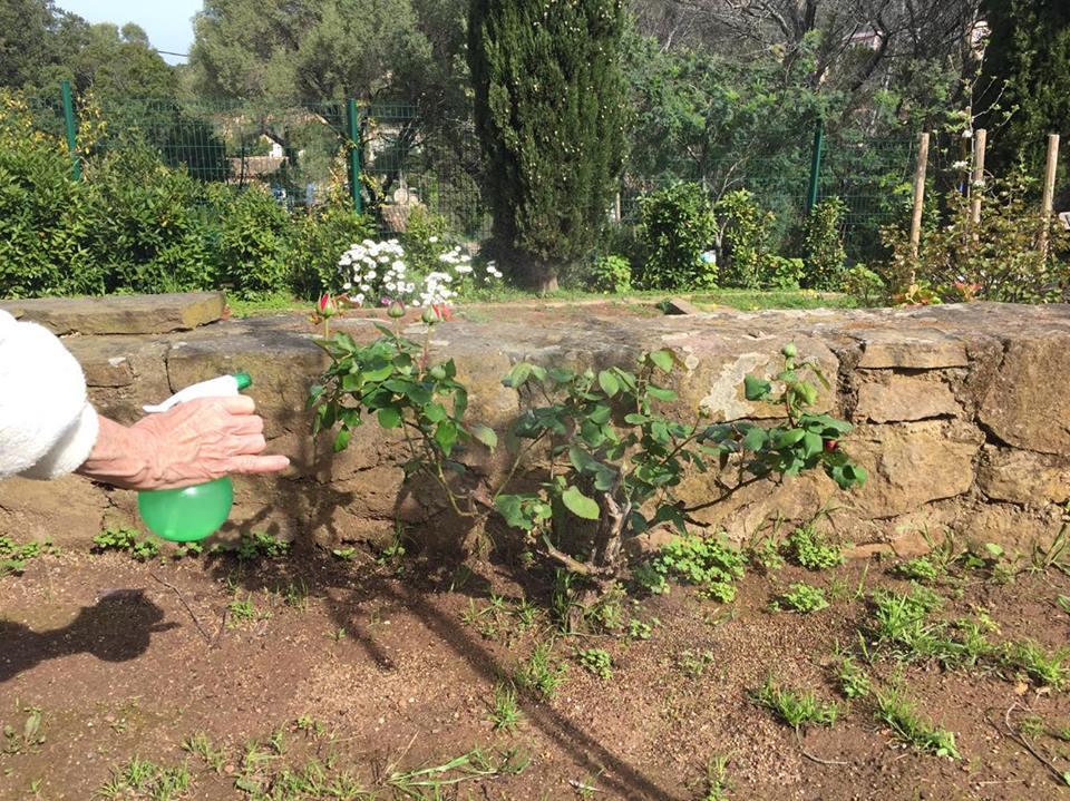 Ail dans le jardin