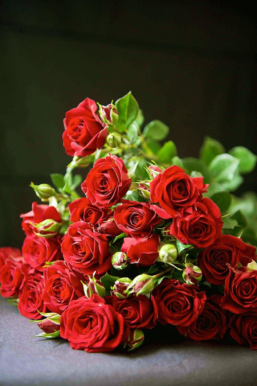 Faire Un Rosier Avec Une Rose fleurs saint valentin : découvrez le langage des roses