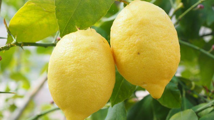 Conservation du citron