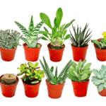 10 mini cactus