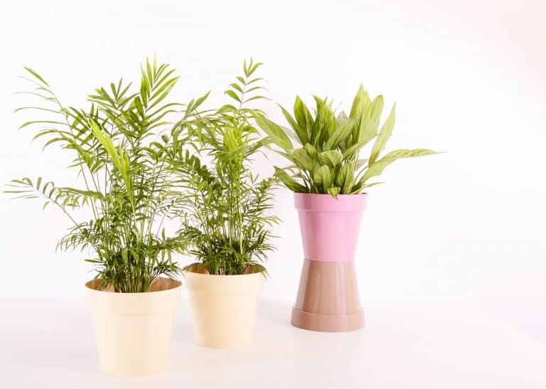 plantes d'intérieur rafraîchissantes dé-polluantes