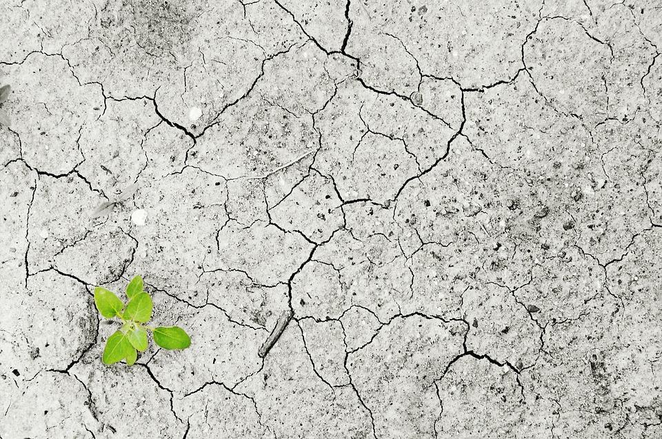 sans eau aucune plante ne pousse