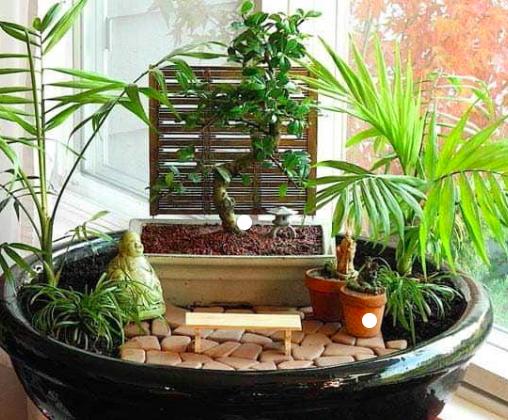 Jardin Japonais Zen : Lotus, Pin, Érable, Cerisier ...