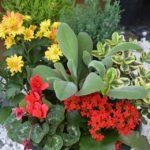 Comment Créer un Massif de Fleurs Vivaces et Lumineux