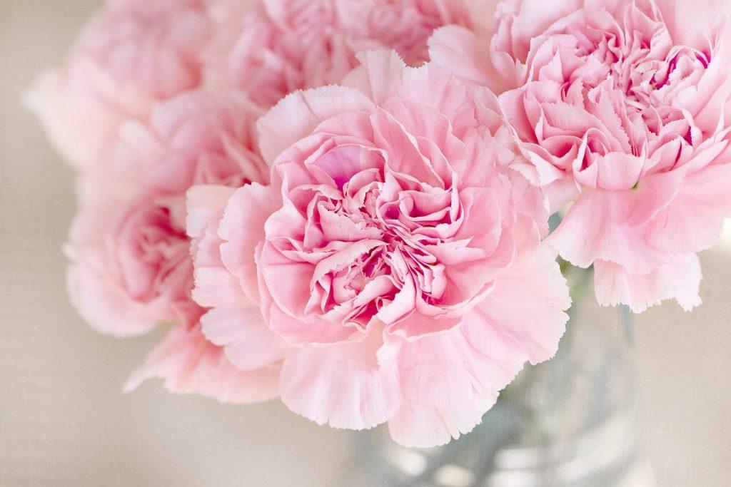 planter des rosiers