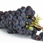 Resveratrol Soin Anti Age