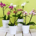 Soin des Orchidées : Comment les Faire Refleurir ?