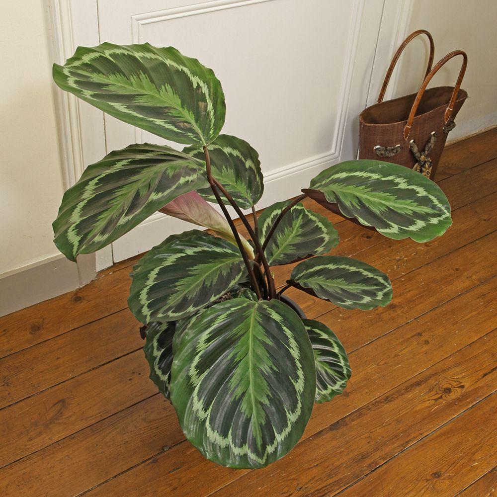 plantes vertes entretien