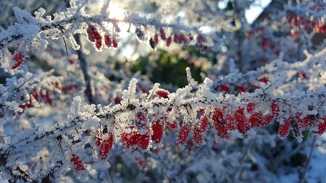 Calendrier du Jardinier : Que Faire en Janvier