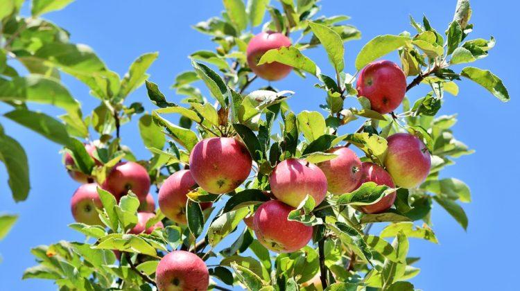 Planter des Arbres Fruitiers Pour pas Cher