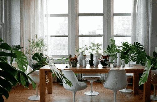 Déco plante intérieur salle à manger