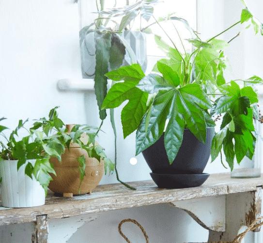 Déco plante intérieur hall d'entrée