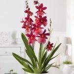 orchidée plante pour la salle de bain