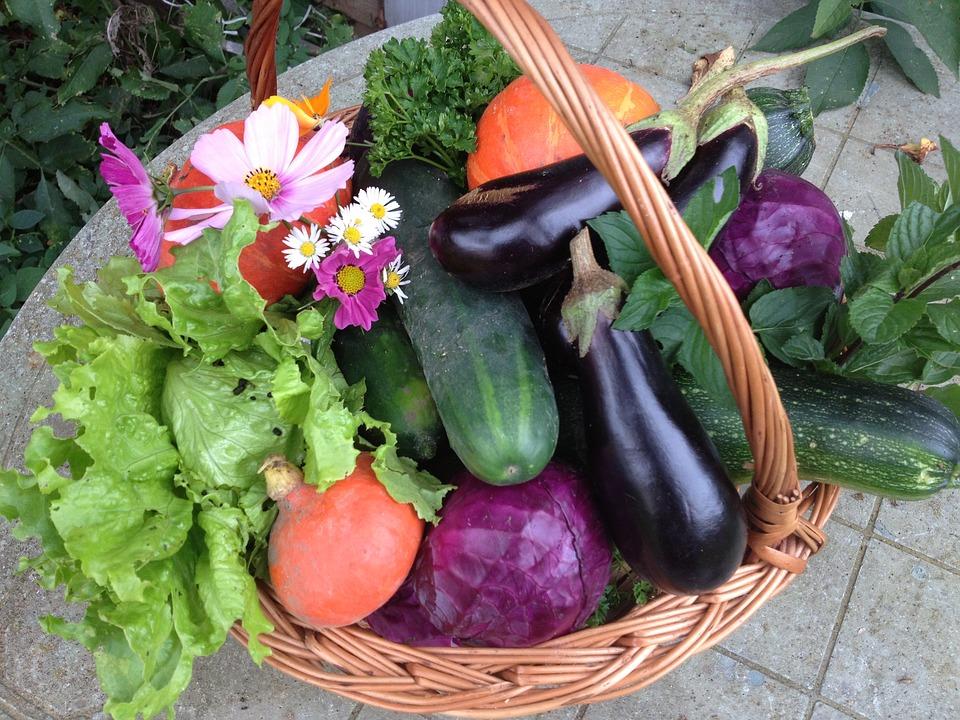 Calendrier des jardiniers au printemps : semis et plantations