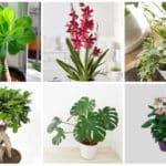 Déco plantes d'intérieur