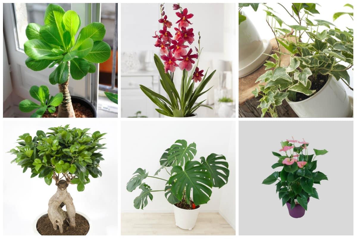 Suspension Pour Plantes D Intérieur plante verte : comment choisir une plante d'intérieur