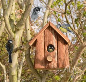 Nichoir pour Oiseaux en bois