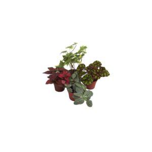 4 mini plantes avec bégonia