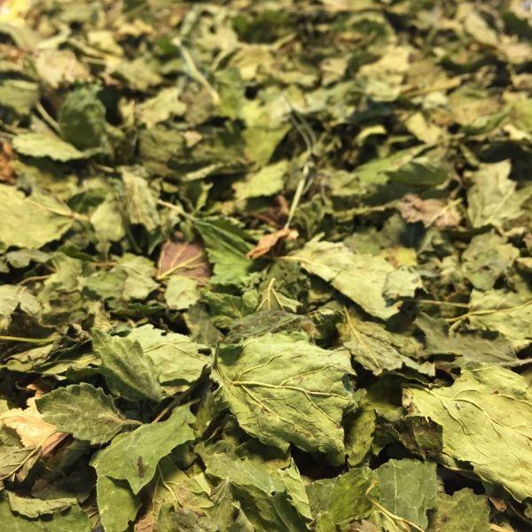 mélisse feuilles