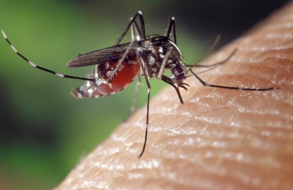 piqure de moustique