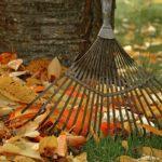 Conseils jardinage automne