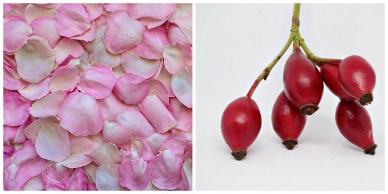 petale de rose cynorhodon