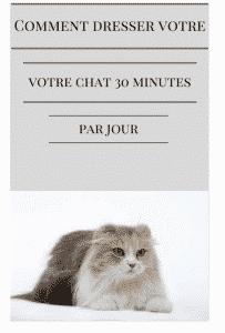 comment dresser votre chat