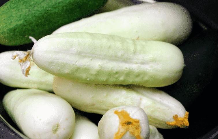 Concombre Blanc De Bonneuil
