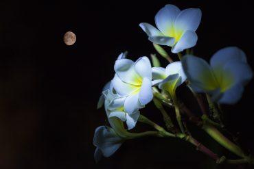 Jardinez Avec La Lune - Mai 2020