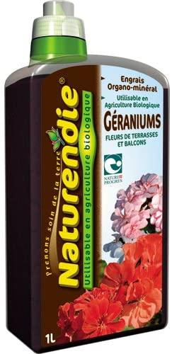 géranium plantation