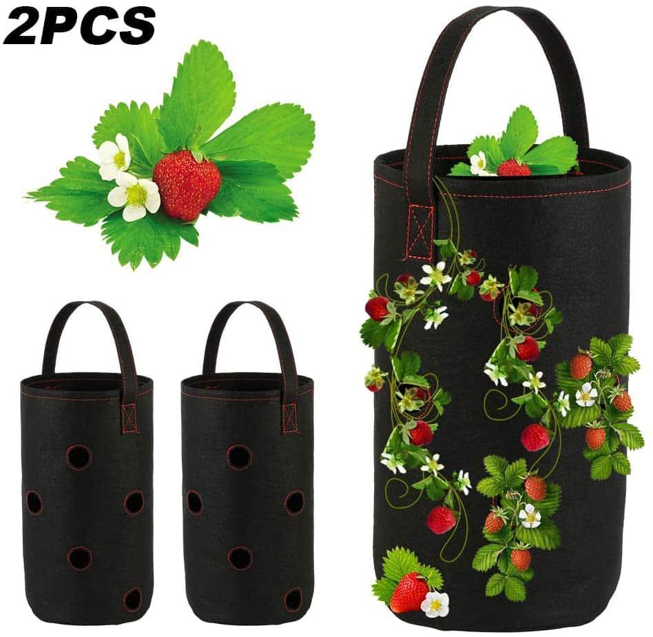 sac plantation fraises