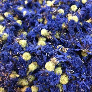 bleuet fleur