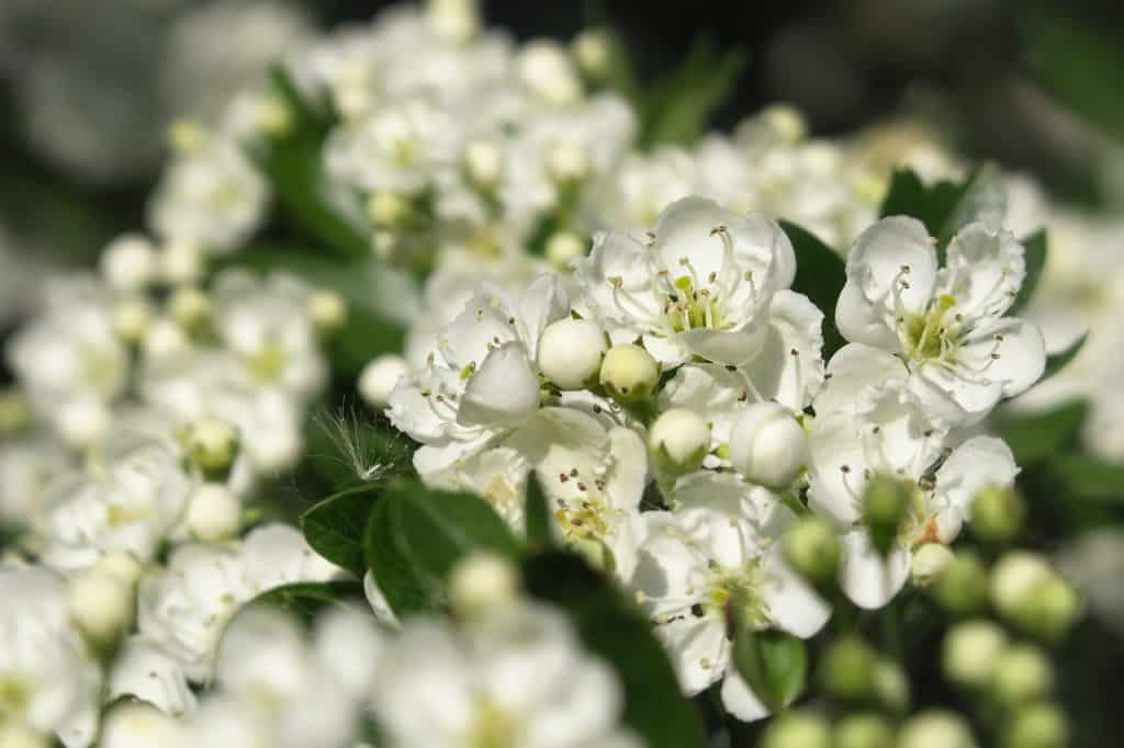 plantes sante