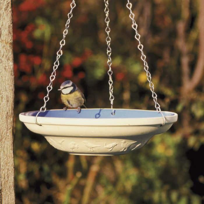 Aidez vos oiseaux de jardin cet été