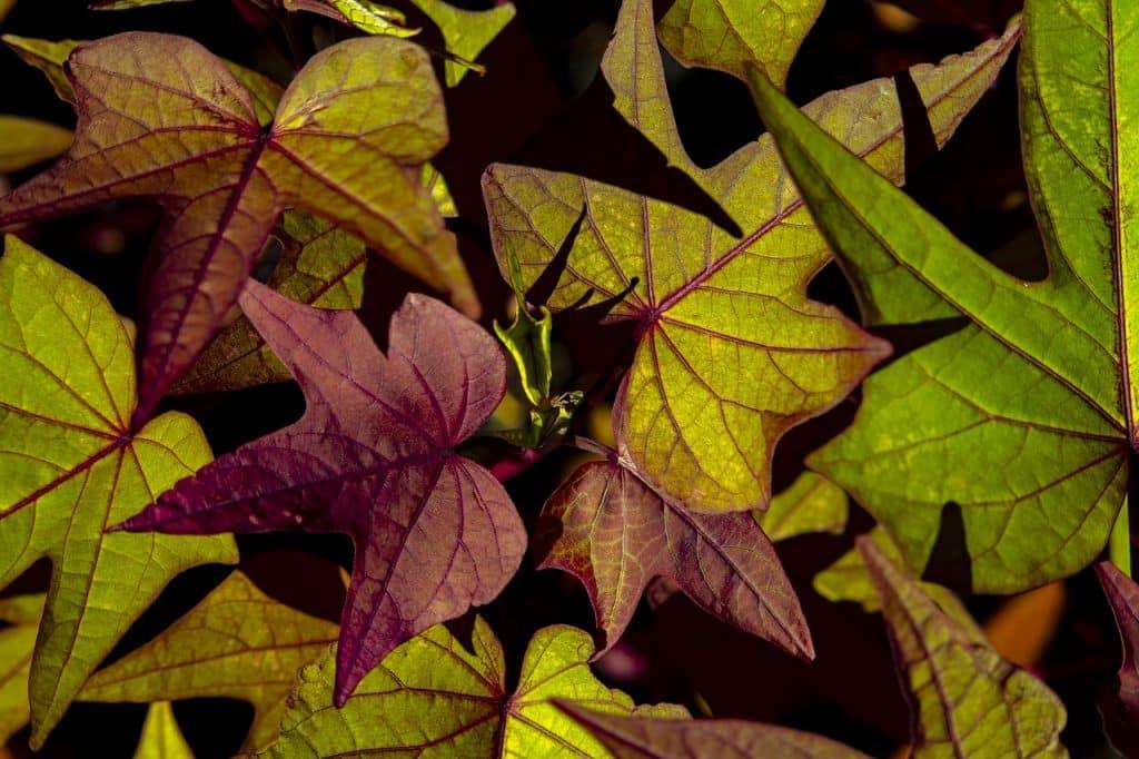 plantes économes en eau