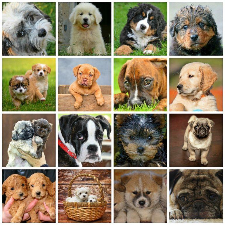 phytothérapie chien