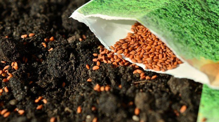 Jardiner Malin - Graines et Semences