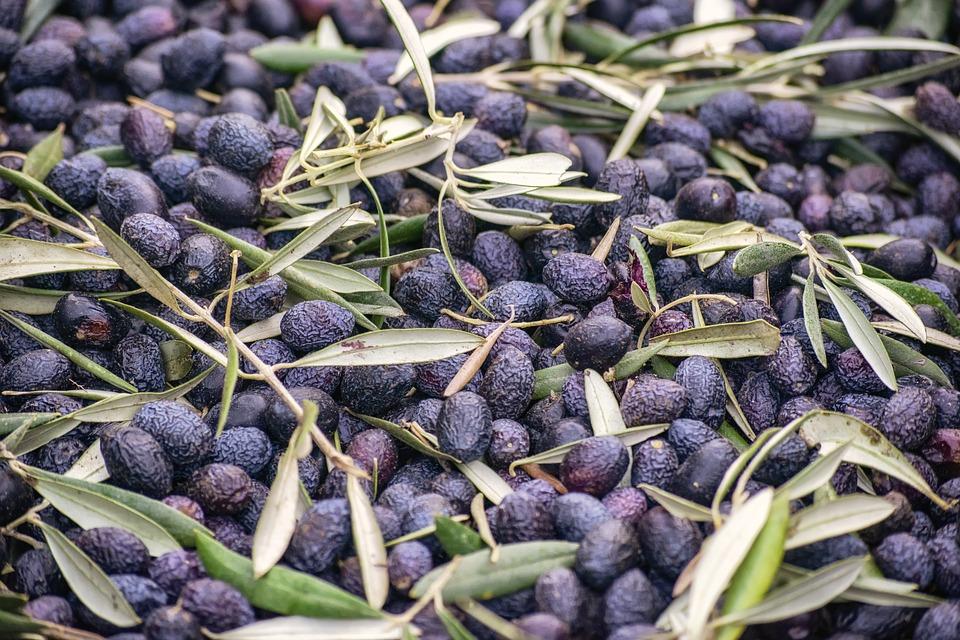 olivier - olives